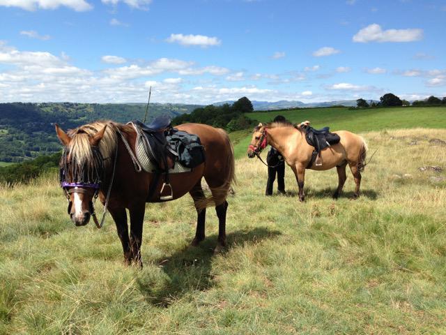 Les chevaux du ranch du barrez